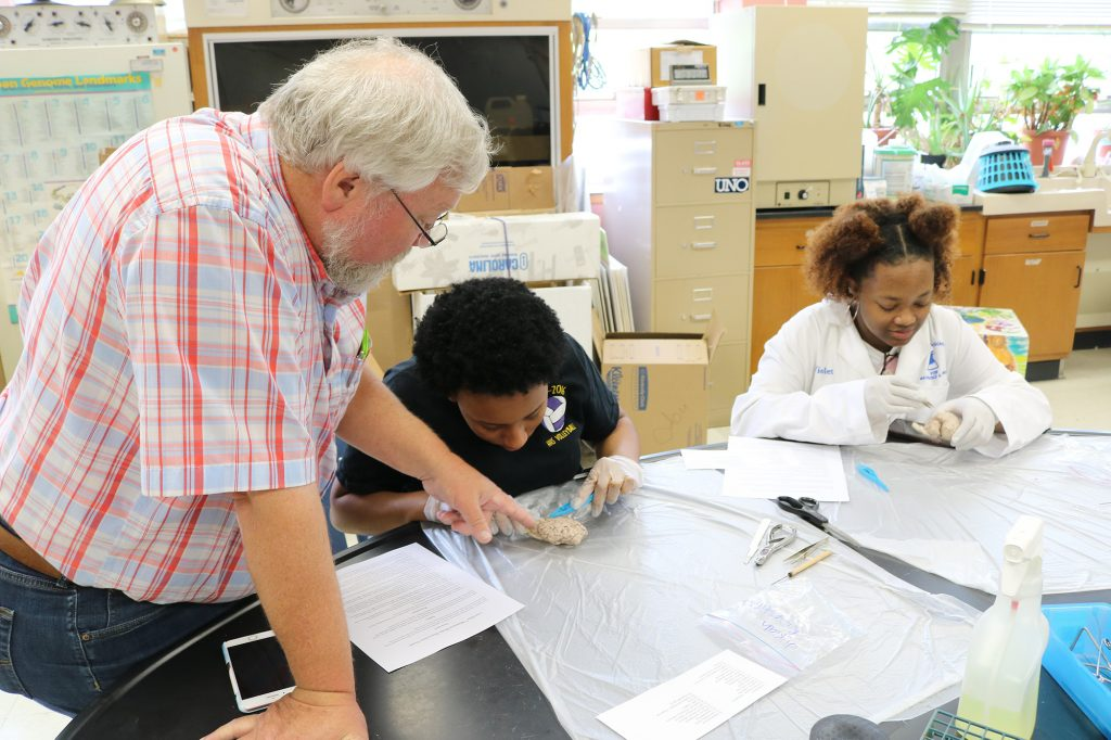 Teacher and students disecting a brain